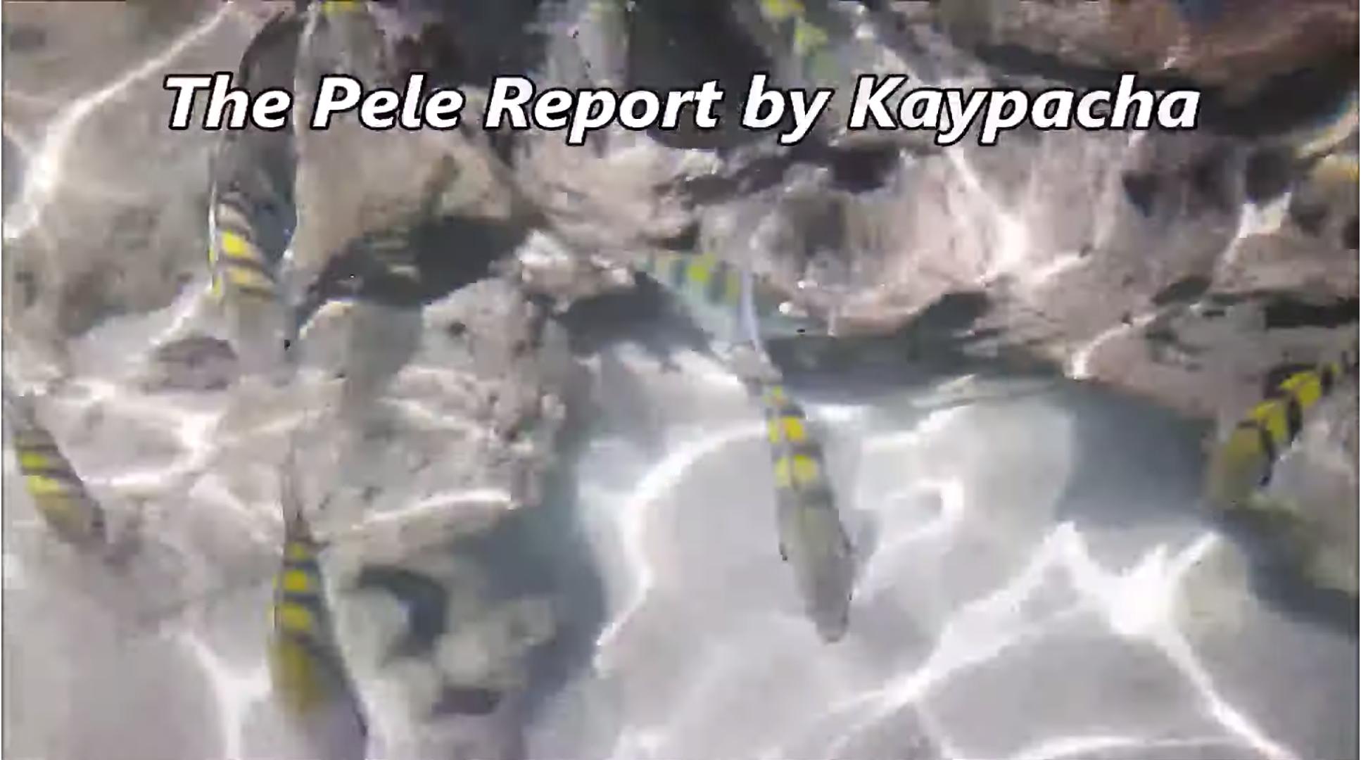 July 10, 2019 – Pele Report, Astrology Forecast