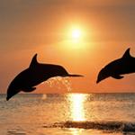 September 9th, 2020 – Pele Report, Astrology Forecast